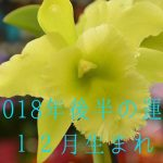 2018年後半の運勢12月生まれ 恒星占星術|365日誕生日占い.net[無料占い